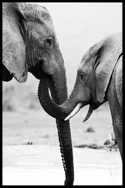 Elephant Mother and Son Juliste