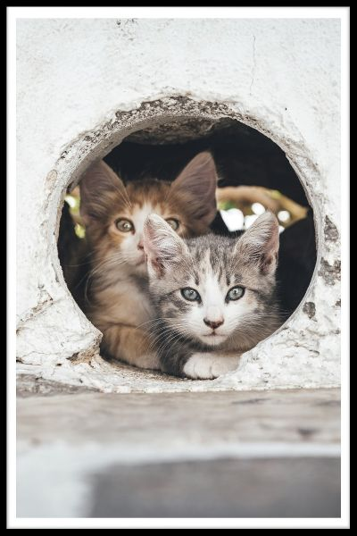Cats Hiding in Hole Juliste