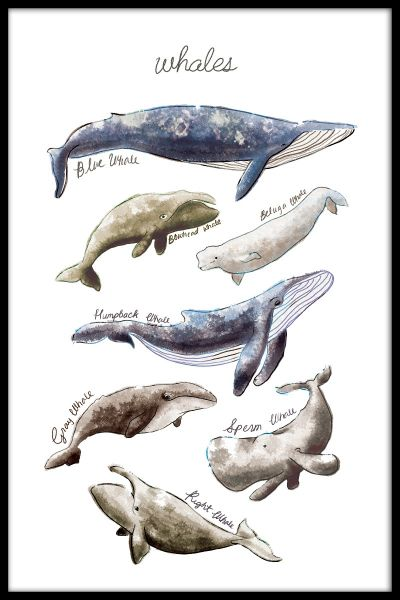 Types of Whales Juliste