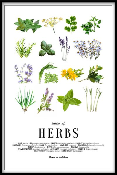Table of Herbs Juliste