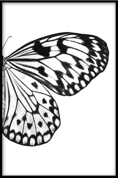 Butterfly Wing N03 Juliste