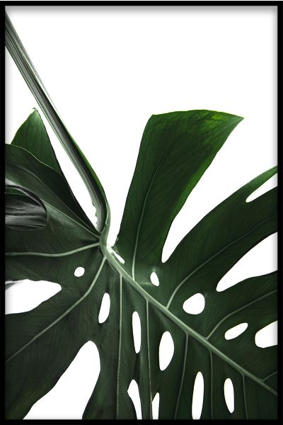 Monstera Close Up N02 Juliste