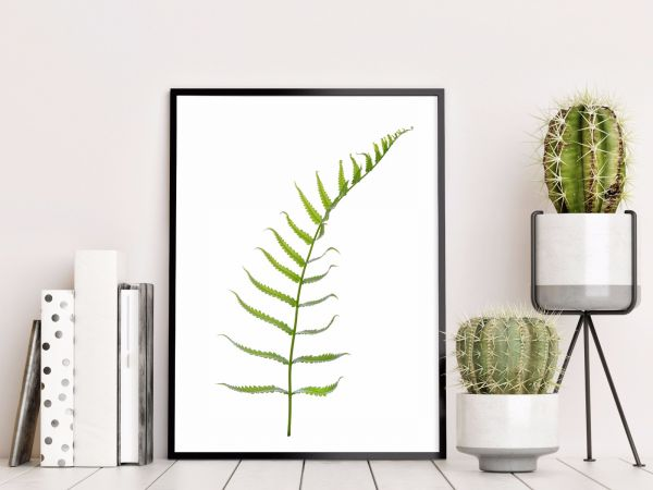 Fern Plant Illustration Printti