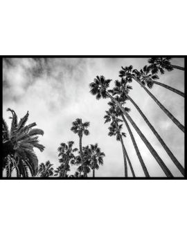 Palm Trees Black and White Juliste
