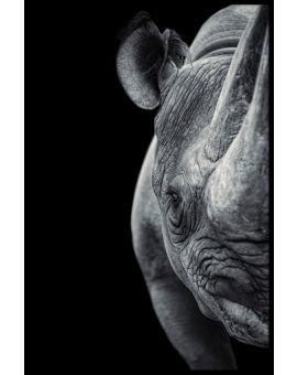 Rhino Portrait Juliste
