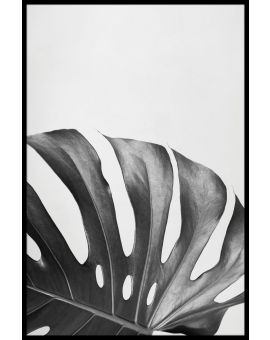 Monstera Deliciosa Leaf Juliste