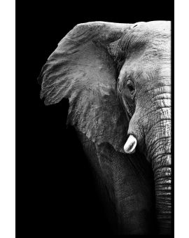 Elephant Portrait Black & White Juliste