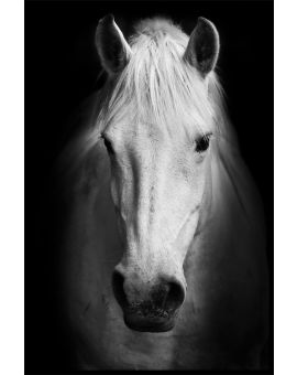 White Horse Portrait Juliste