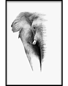 Elephant White Portrait Juliste