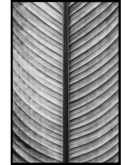 Black & White Palm Leaf Juliste