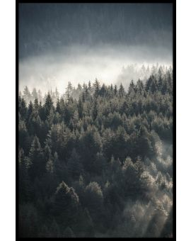 Misty Pine Forest Juliste