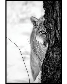 Cougar Portrait Juliste
