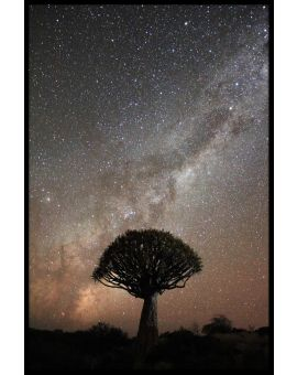 Quiver Tree Milkyway Juliste