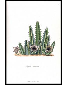 Cactus Illustration N02 Juliste