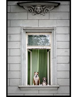 Window Dogs Juliste