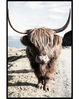 Highland Cattle N06 Juliste