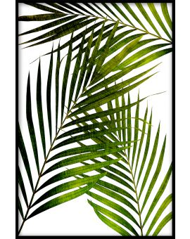 Palm Leaves Juliste