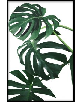 Monstera Leaves Juliste
