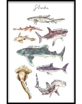 Sharks Collection Juliste