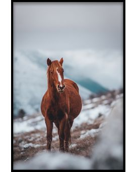 Horse on Mountain Juliste