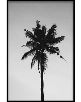 Palm Tree Black & White Juliste