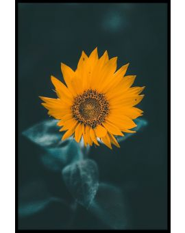 Misty Sunflower Juliste