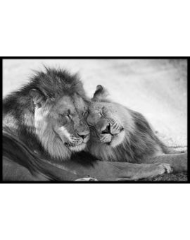 Lion Love Juliste