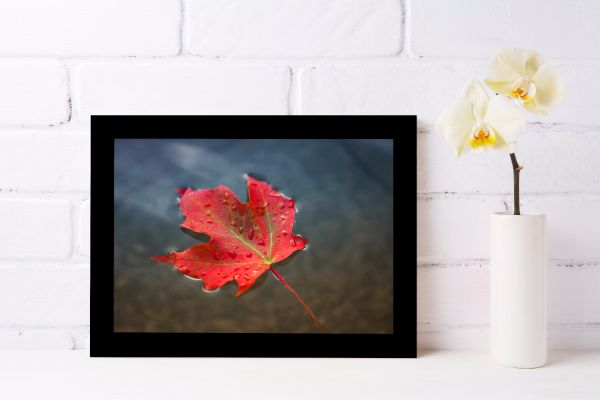 Red Maple Leaf in Water Printti