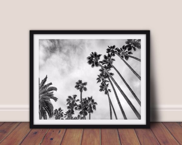 Palm Trees Black and White Printti