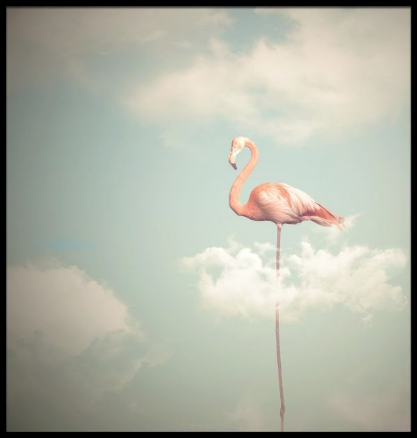 Flamingo Illustration Juliste