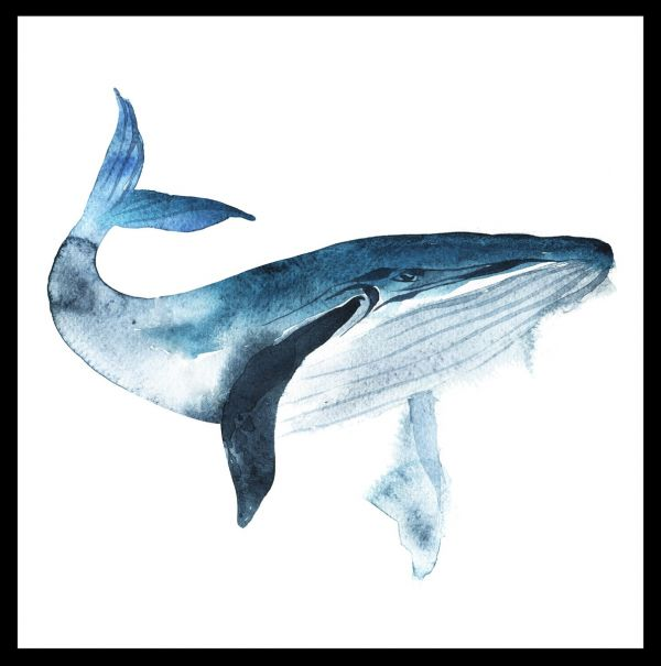 Blue Whale Watercolor Juliste