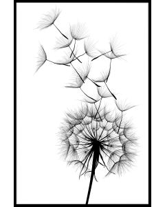 Dandelion Black and White Juliste