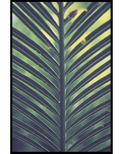 Palm Leaf Green Yellow Juliste